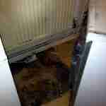 13.one of the dirtiest flats we've cleaned- before